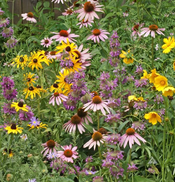 Eastern Pollinator Native Seed Mix