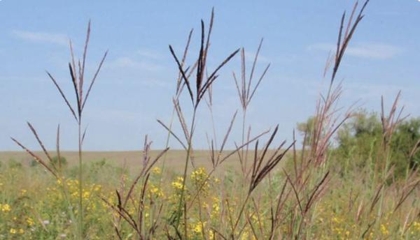Native Upland Wildlife Mix