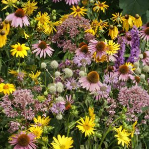 Tallgrass Prairie Wildflower Seed Mix