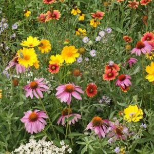 Honey Bee Feed Seed Mix