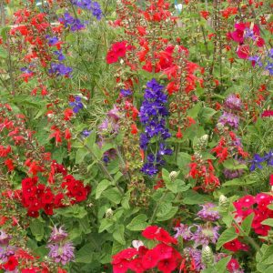 Humming Bird Seed Mix