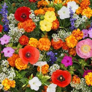 Deer Resistant Flower Mix