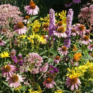 Monarch Native Wildflower Seed Mix