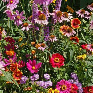 Monarch Butterfly Garden Seed Mix