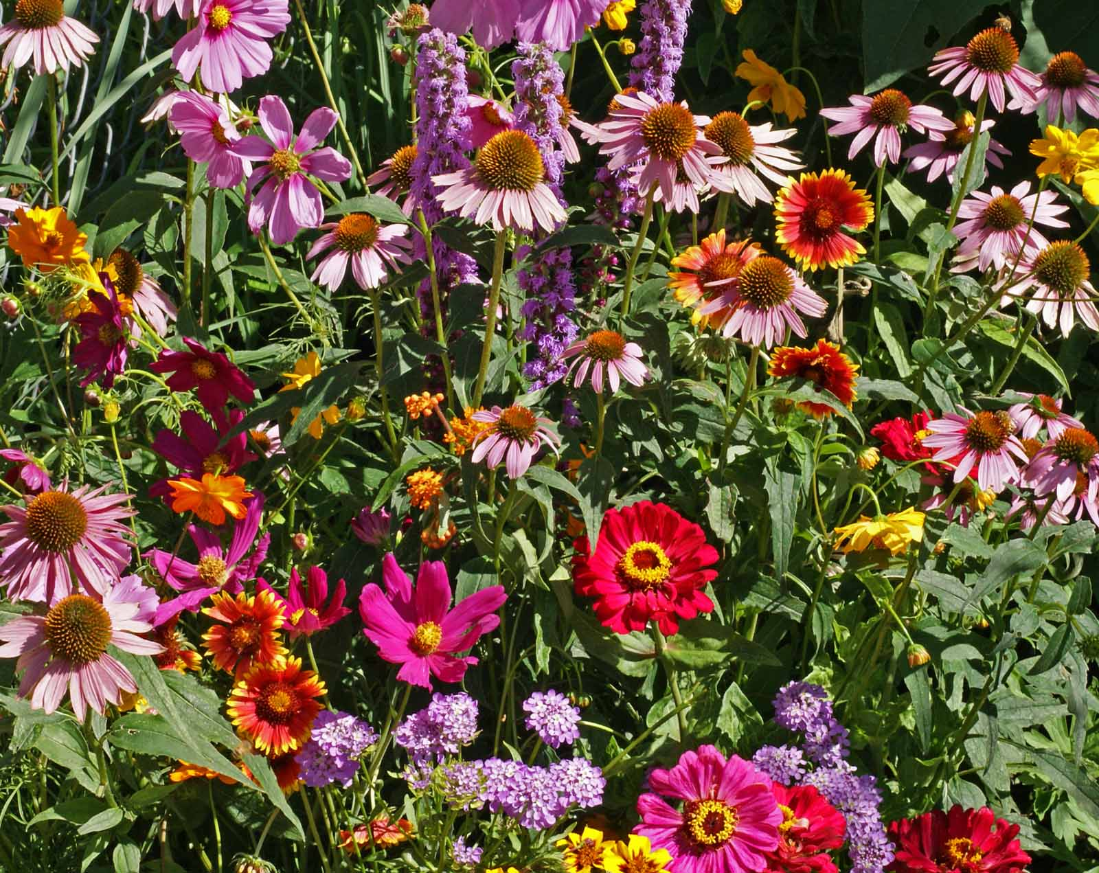 Monarch Garden Butterfly Seed Mix