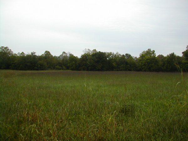 Southeast Native Grass Mix