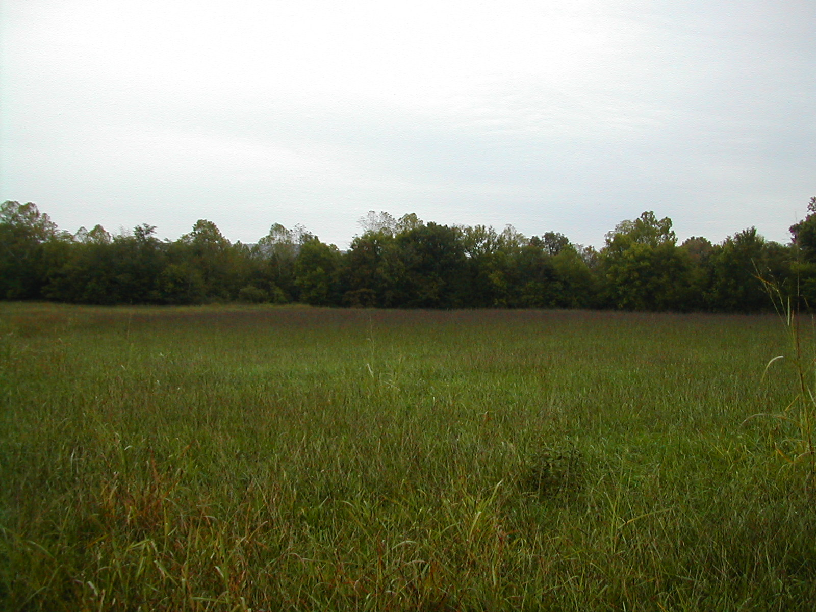 Southeast Native Grass Mix