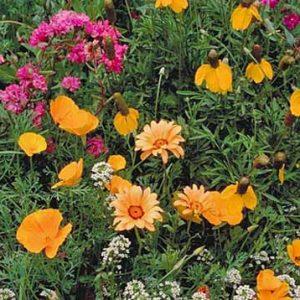Low Grow Wildflower Seed Mix