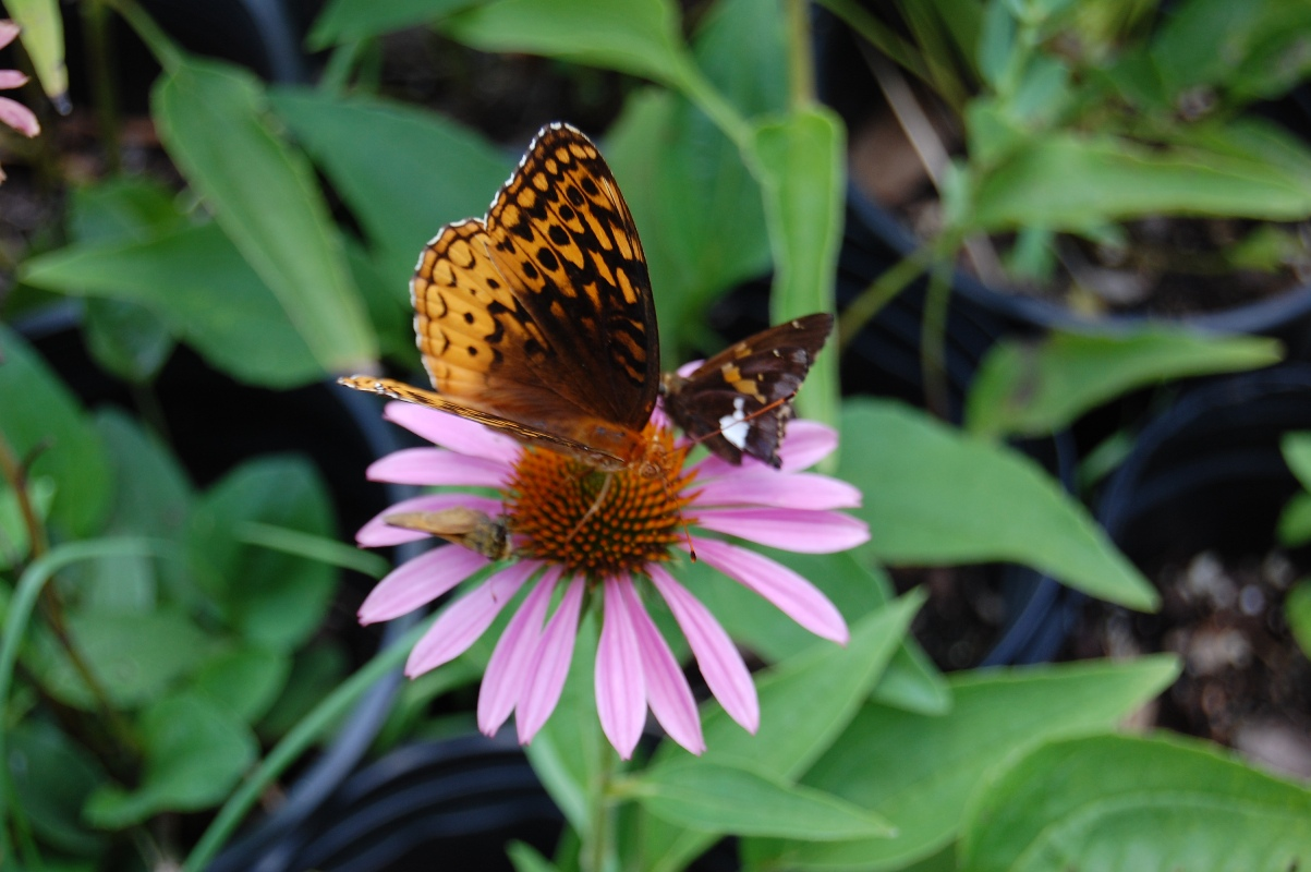 Beautiful Bird and Butterfly Wildflower Seed Mix