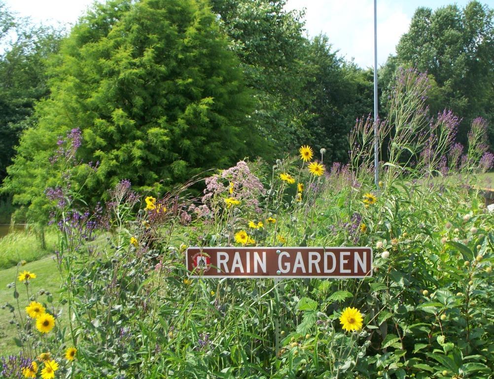 Rain Garden Seed Mix