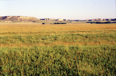 Shortgrass Prairie Grass Seed Mix
