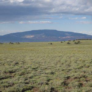 Southwest Native Grass Mix- native grasses from southwestern US