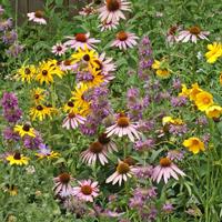 eastern-pollinator200x200
